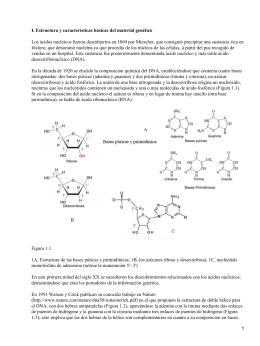 ADN (Ácido Desoxirribonucleico), Hibridación y reacción en cadena de las Polimerasas