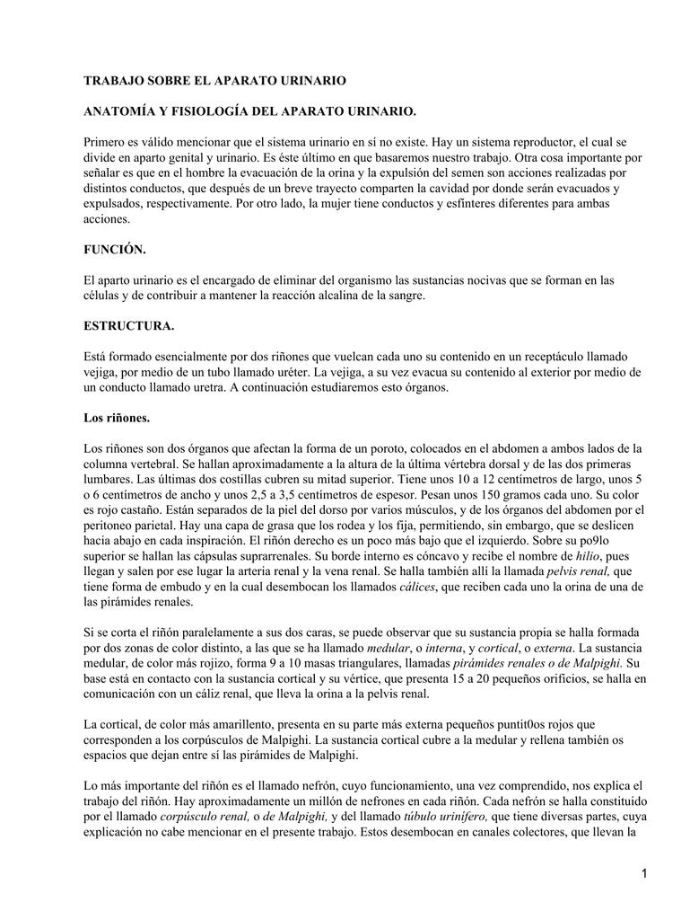 TRABAJO SOBRE EL APARATO URINARIO ANATOMÍA Y FISIOLOGÍA DEL APARATO ...