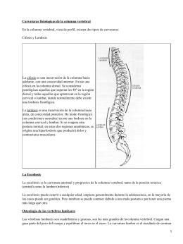 Curvaturas fisiologicas de la columna vertebral Cifosis y Lordosis