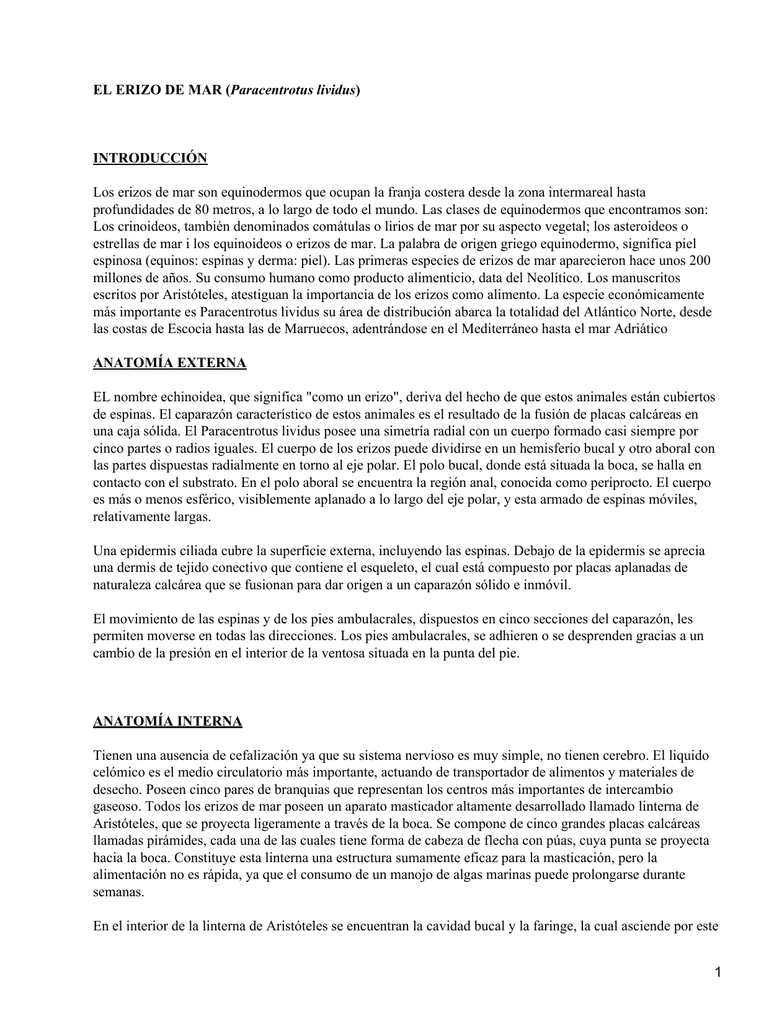 Erizo de mar (Paracentrotus lividus)