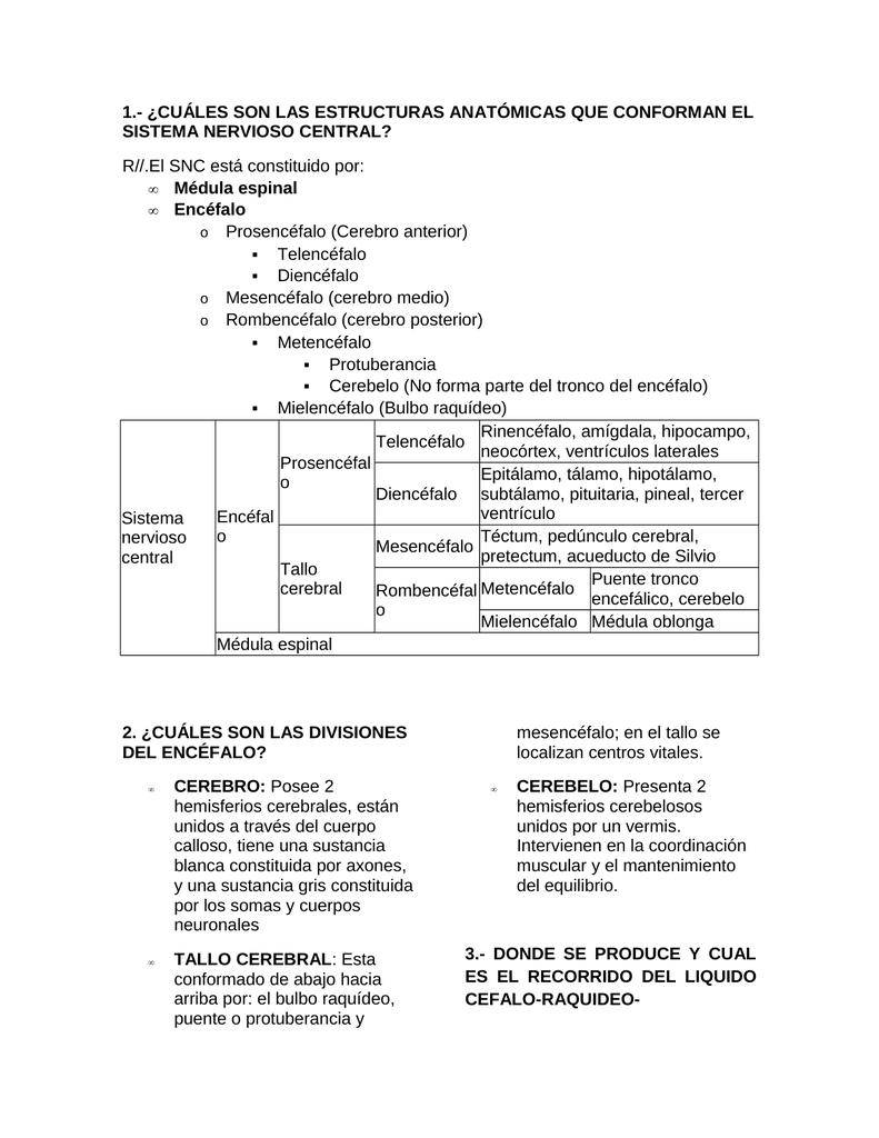 Estructuras anatómicas del sistema nervioso central