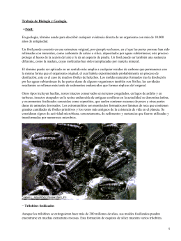Trabajo de Biología y Geología. Fósil: •