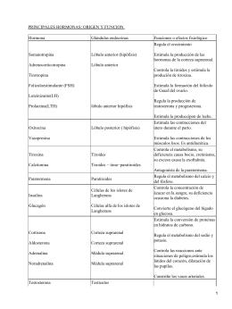 Hormonas: origen y función