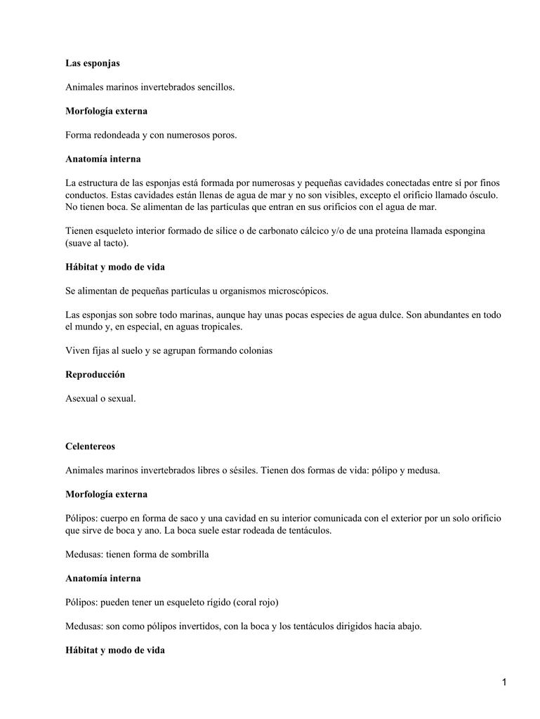 Las esponjas Morfología externa Anatomía interna Animales marinos ...