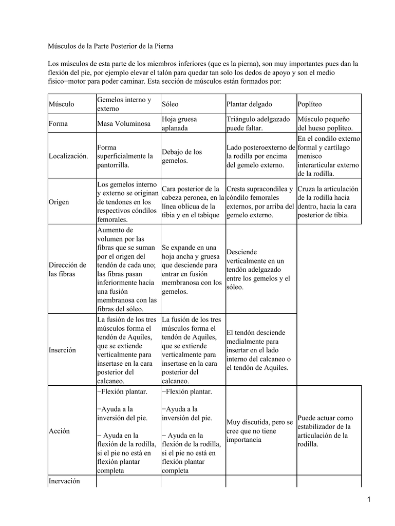 musculos del miembro inferior origen e insercion