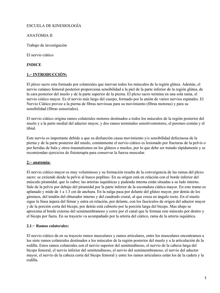 Hermosa Anatomía De Bala Patrón - Anatomía de Las Imágenesdel Cuerpo ...