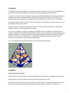 para Silla Paseo,Asiento de Coche,Sof/á Universal Colchoneta A/íslan y Transpirables Verano,Material de C/á/ñamo Natural