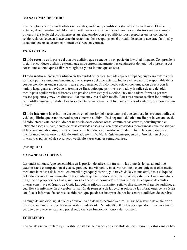 Único Anatomía Interna De La Oreja Cresta - Anatomía de Las ...