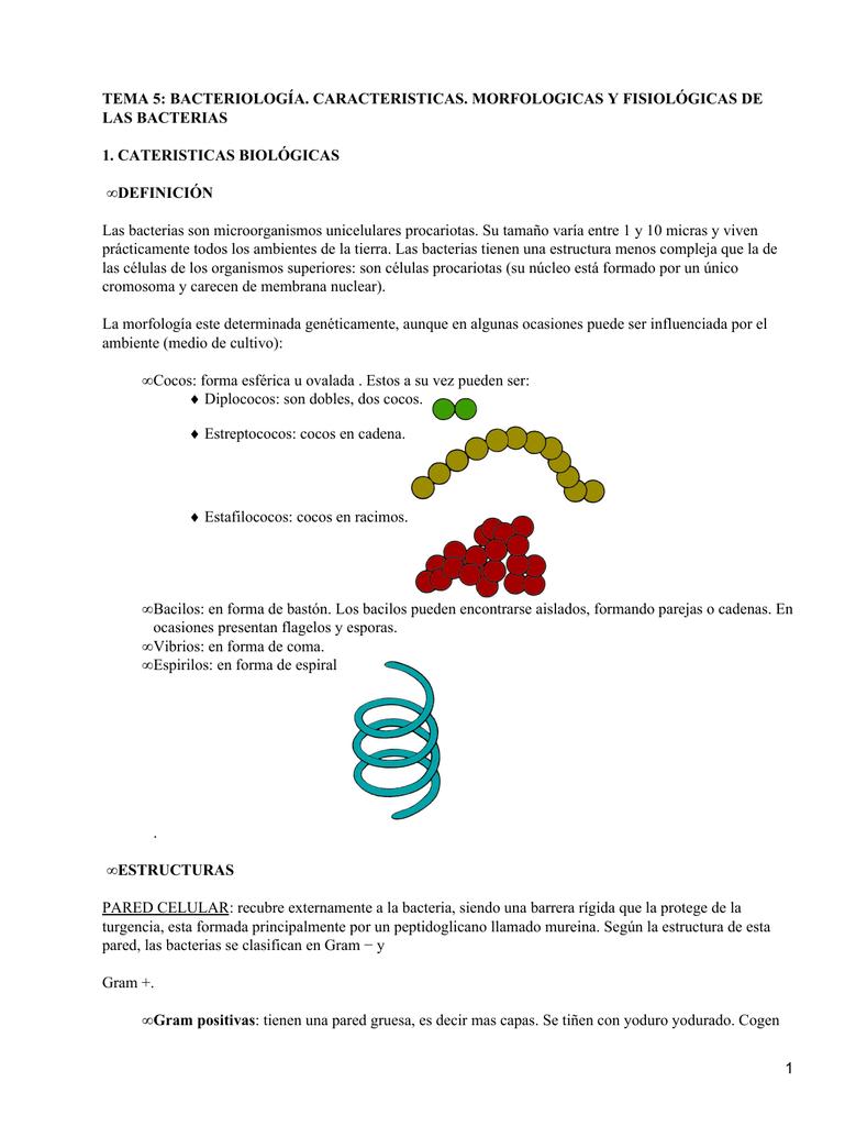 Tema 5 Bacteriología Caracteristicas Morfologicas Y