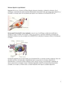 Sistemas digestivos especializados