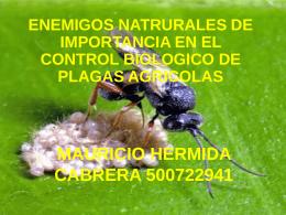Enemigos naturales de importancia en el control biológico de plagas agrícolas