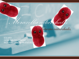 Moraxella catrrhalis