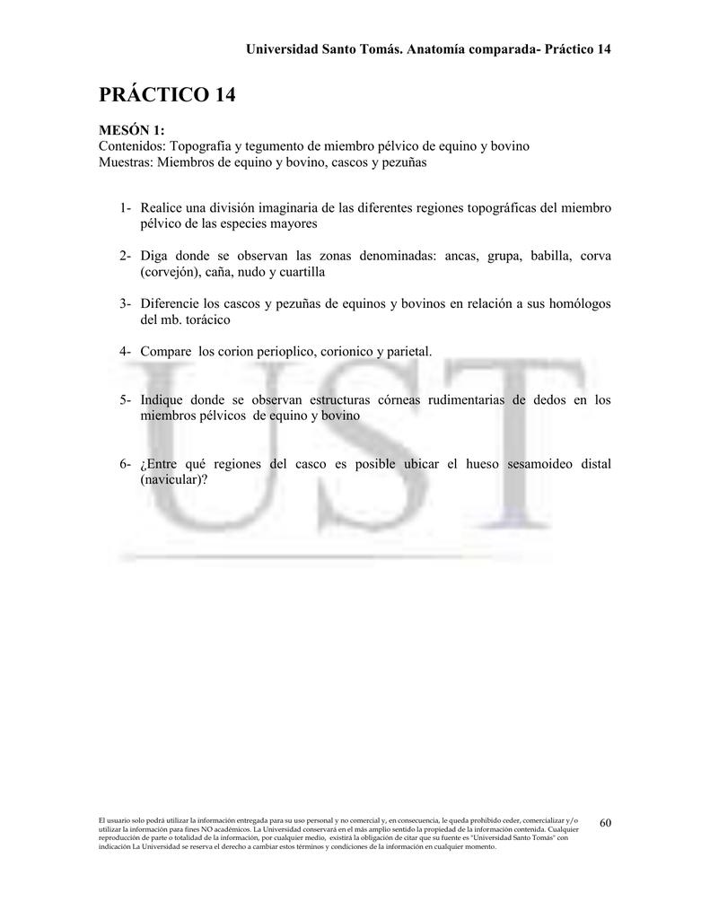 o-AVcom-Proto-Prac 14-mb pelvico (60-64)