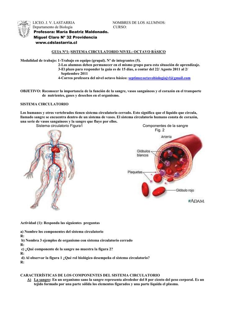 Tres sistema circulatorio nombrar principales partes del