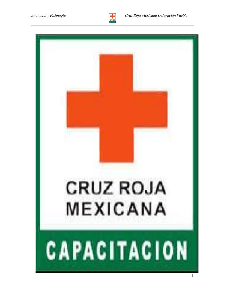 manual de anatomía - DIPSA - Distribuciones Industriales de Puebla