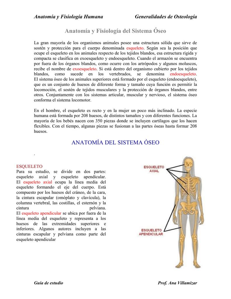 Anatomía y Fisiología del Sistema Óseo
