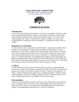 Cuidados de los Erizos - Avian and Exotic Animal Clinic