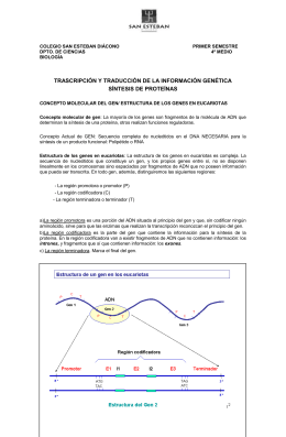 transcripcion_y_sintesis_proteinas_2