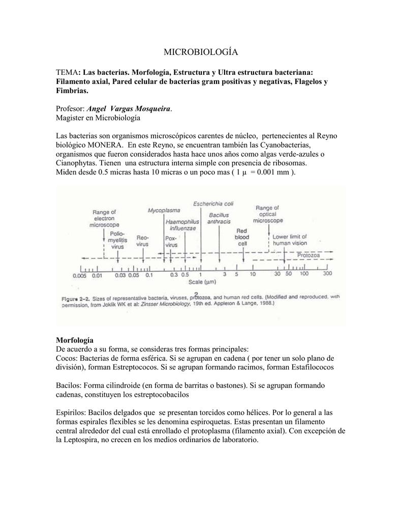 Estructura Y Movimiento Del Flagelo