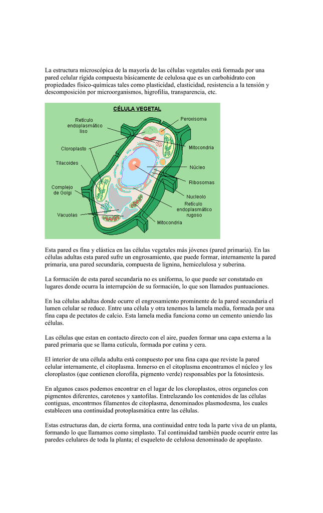 La Estructura Microscópica De La Mayoría De Las Células