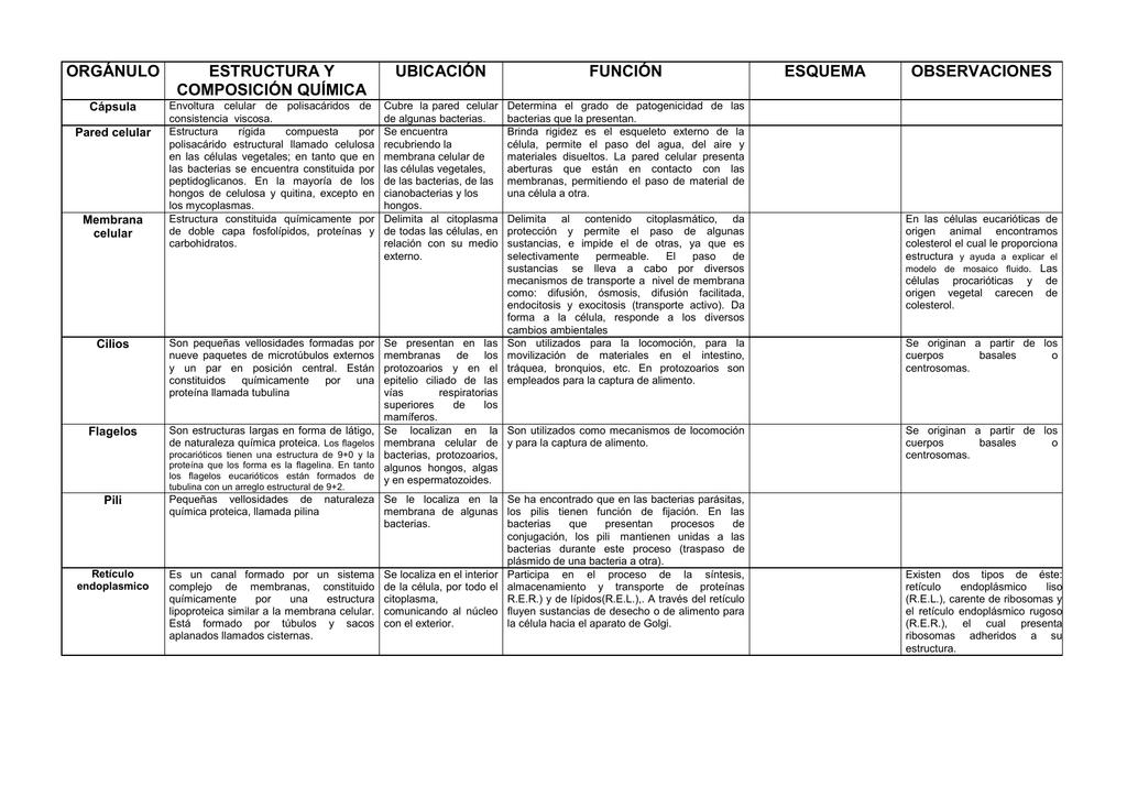 Orgánulo Estructura Y Composición Química