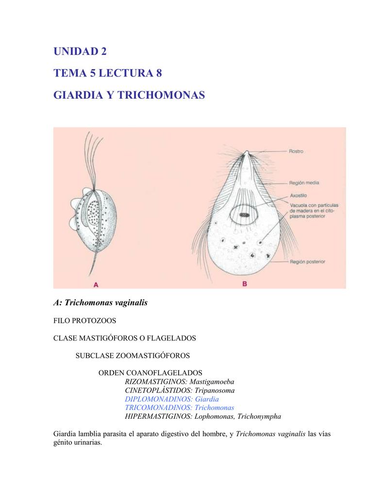 Giardia és trichomonas, Giardia a férgek univerzális gyógyszere