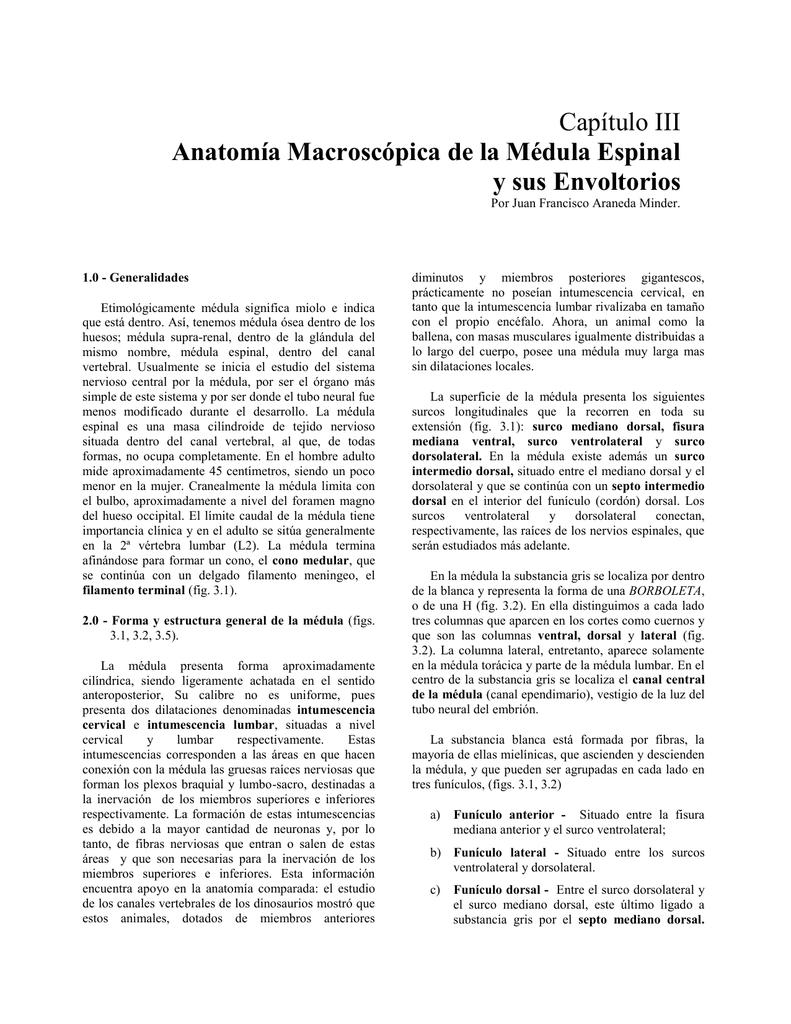 4. Anatomía de Médul..
