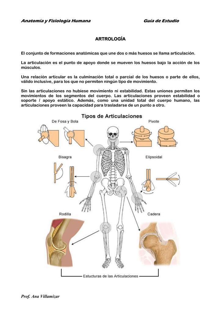 Lujo Anatomía Y Fisiología Humana Guía Huesos Estudio Molde ...