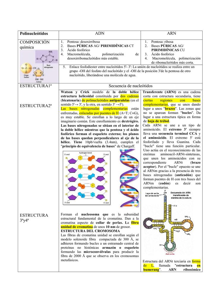 Polinucleótidos Adn Arn Composición