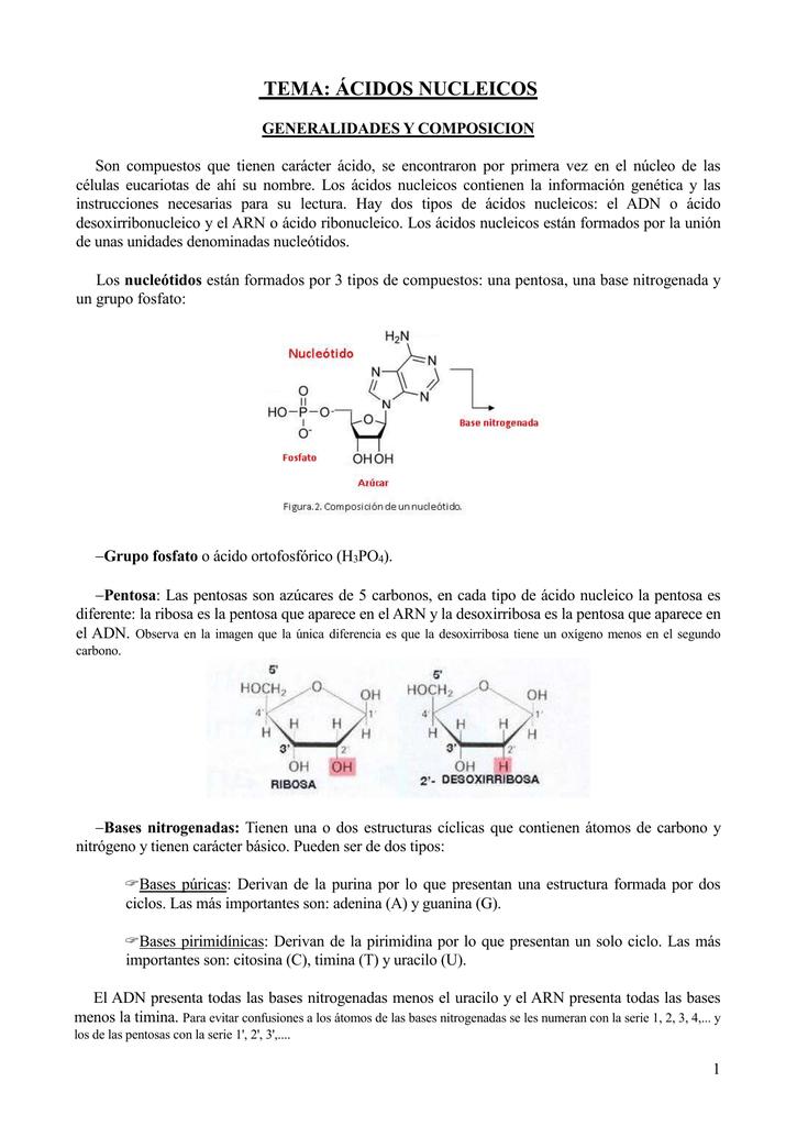 Adn Y Division Celular 4º Esopopular