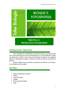 4_ESO_AMPL-Practicas_3_files/FOTOSINTESIS 3