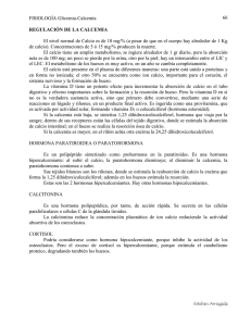 Calcemia, regulación de la