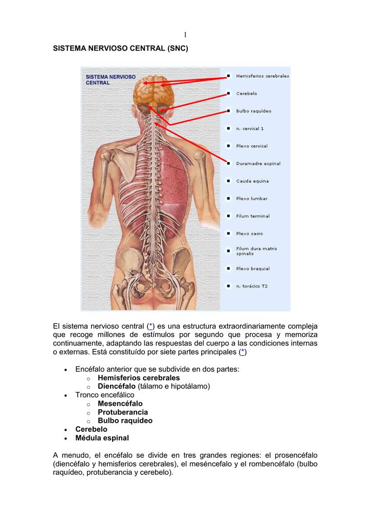 Sistema Nervioso Central Snc