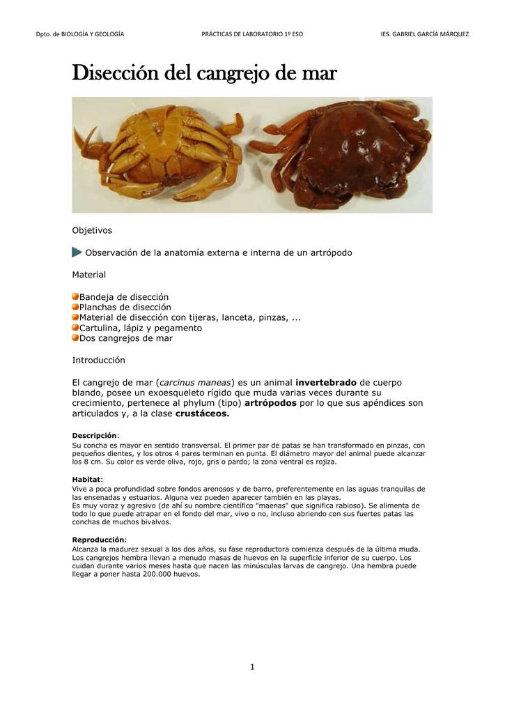 Disección del cangrejo de mar