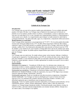 Cuidado de las Tortugas Caja - Avian and Exotic Animal Clinic