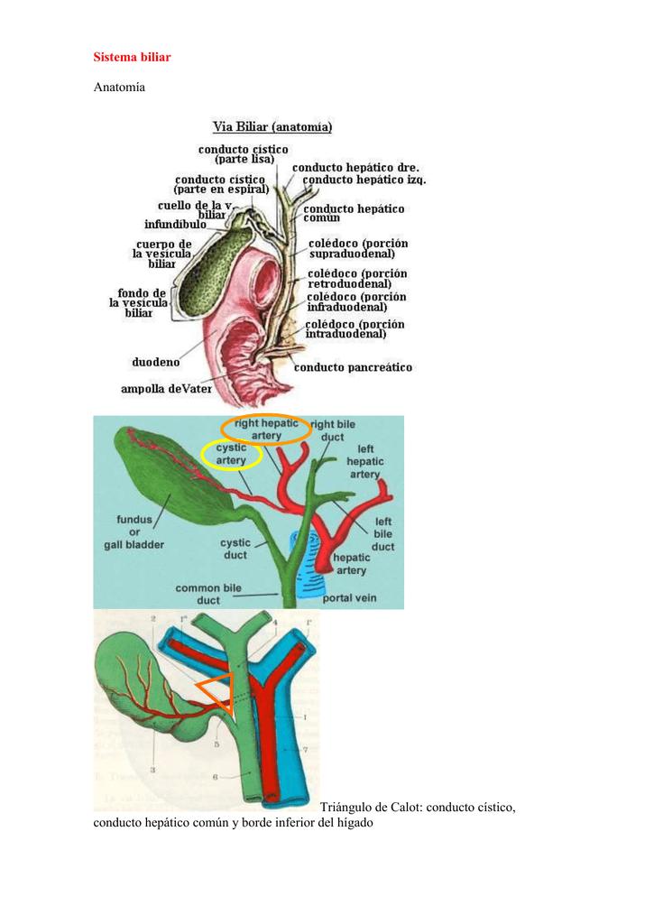 Sistema biliar