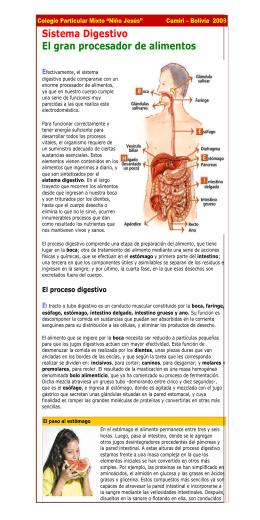 Sistema Digestivo El gran procesador de alimentos  E