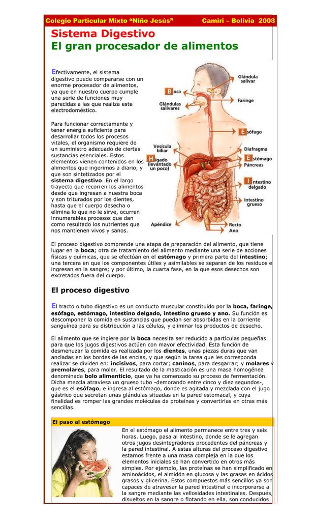 qué función cumple el intestino grueso en el sistema digestivo