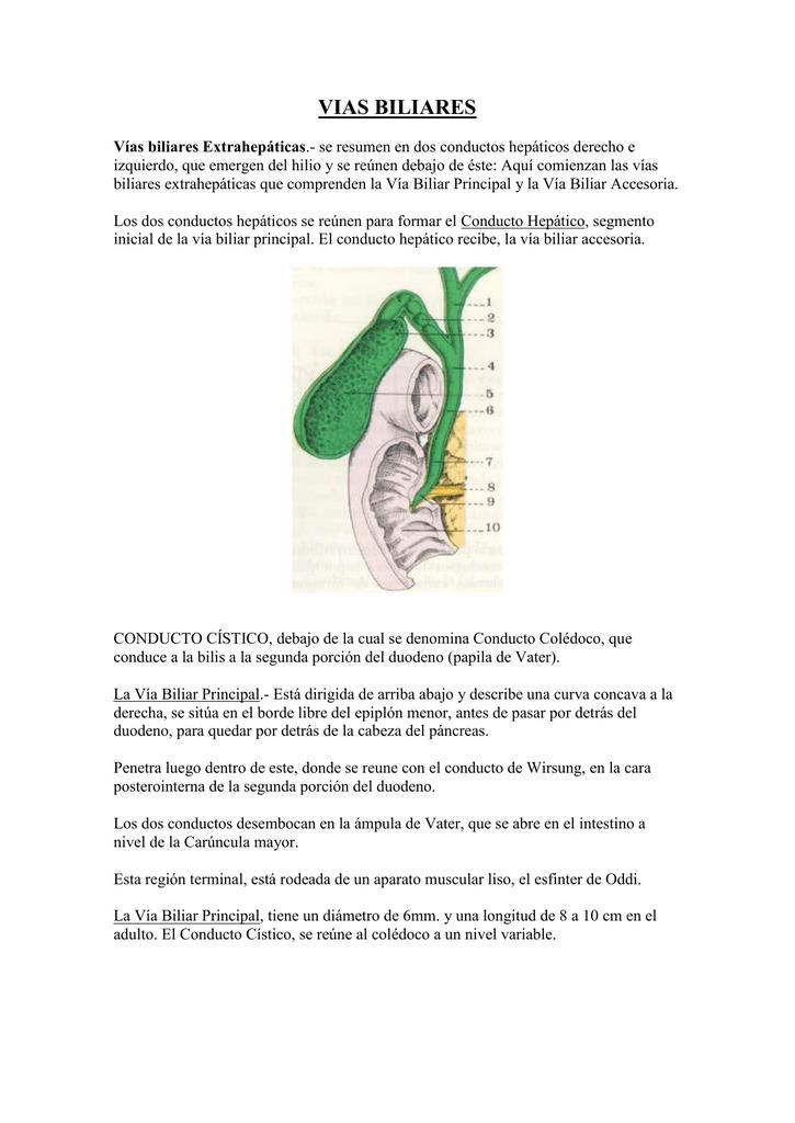 agenesia de los conductos sistema biliar