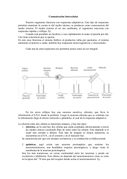 comunicacion-intercelular-2
