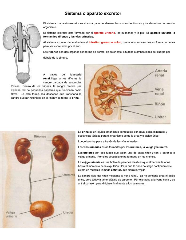 acido urico da disfuncion erectil como eliminar la gota del pie bajar acido urico medicina natural