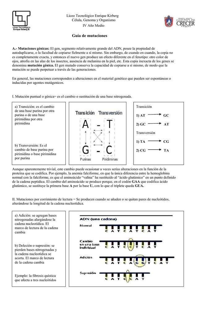 Guia de Mutaciones 4°A - Liceo Tecnológico Enrique Kirberg
