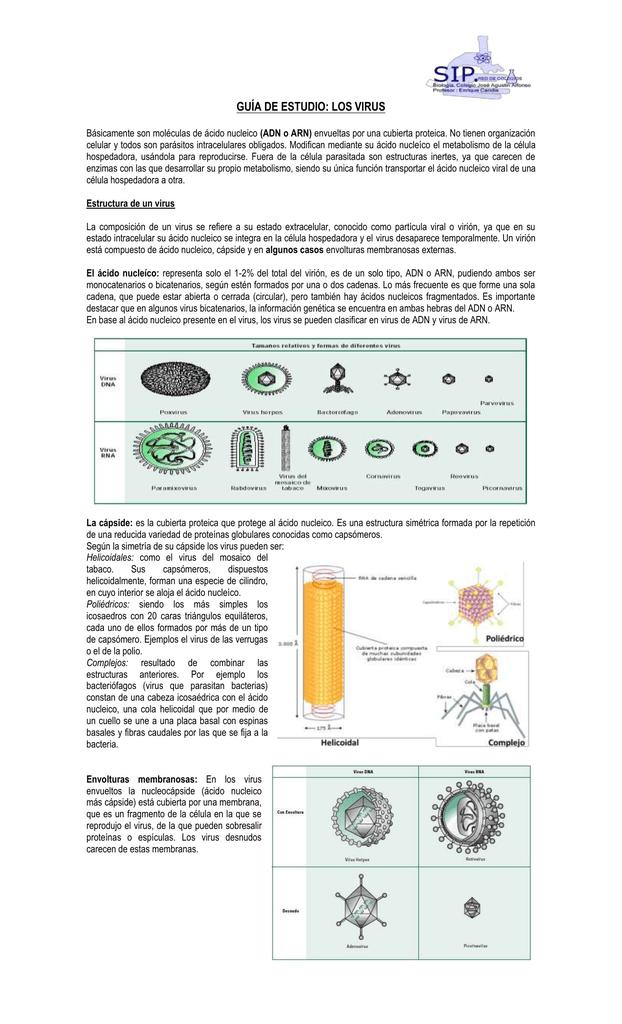 Guía De Estudio Los Virus