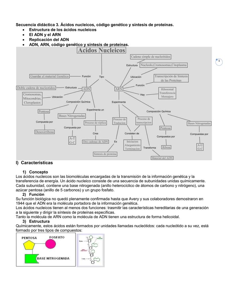 Estructura de los ácidos nucleicos El ADN y el ARN