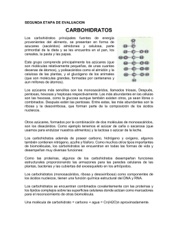 carbohidratos - Webquest Creator 2