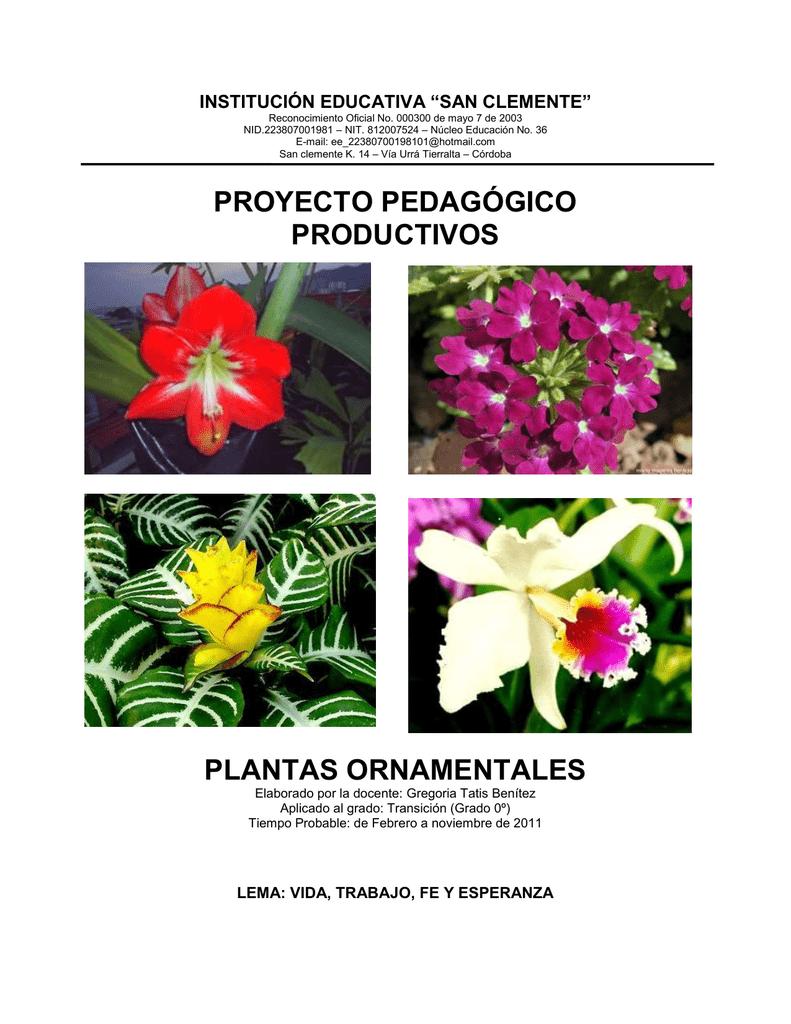 Proyecto pedag gico productivos plantas ornamentales for Plantas decorativas ornamentales