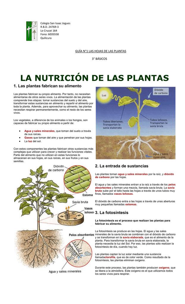 funcion del agua y las sales minerales en las plantas