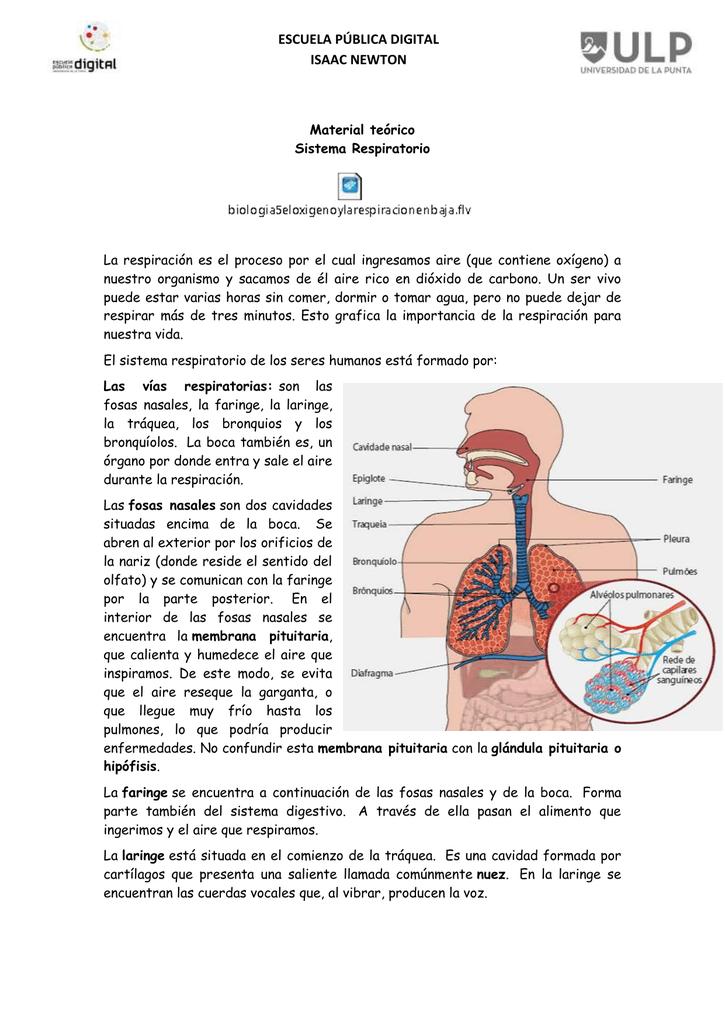 T.p N1Material teóricosisrespitarotio