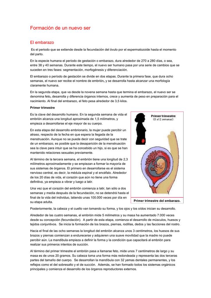 Como empieza el embarazo desde la fecundacion
