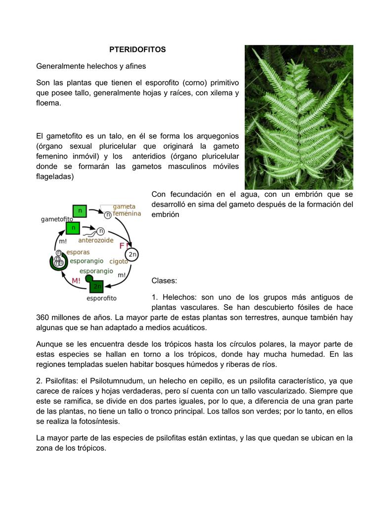 PTERIDOFITOS Generalmente helechos y afines Son las plantas